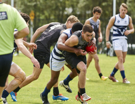 VAFA give Hawks masterclass in AFL
